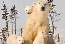 ANIMALS | Family