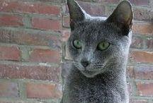 ANIMALS | Cats