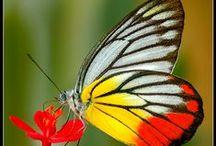 ANIMALS | Butterflies & Moths