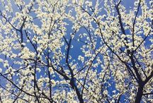 OUT / flowers plum