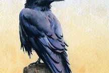 Birds / Birds I like. Mainly crows, Ravens, bluebirds and King fishers