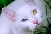 Macskák és kiscicák
