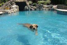 Gunite Swimming Pools / Custom Gunite Pools