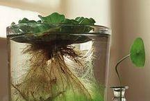 Growing/Выращивание растений