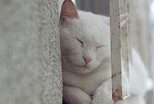 KITTIES!!!!! / by Aimee Delucchi