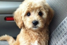 Caaa-uuuute!!! :)  / Puppies and hot men. Duh?