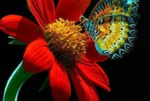 Butterflies & Moths / by Nish