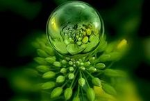Green Envy / by Nish