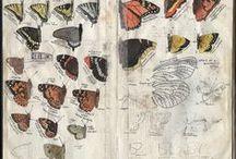 Nature Journals / Nature journal inspiration and journal making tutorials