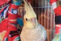 I <3 Birds! / I just... LOVE BIRDS! Aw ma glob! So cute!