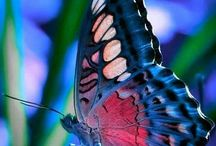 Butterflies / Insects