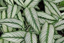 g r e e n   p l a n t s / Green plants that I wish that I had at home