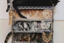 Self-Storage Humor / Jokes and funny photos of self-storage attempts and cute animals in funny situations, such as the handy cat rack and the dog in bubble wrap.
