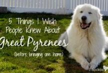 Cute pets / Dedicated to our four-legged friends