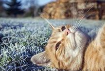 ♥ CAT ♥ / so cuteeeeeeeee =D my favorite pet ❤