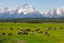 Equestrian Travel Destinations