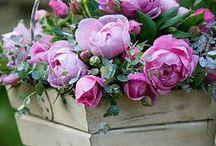 Gardens and flowers / Beautiful to look at / by Lynne Hantverk Einhorn
