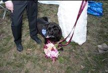 Brandi + Michael in Early Spring / Bring the Dog! Early Spring Wedding  Dress:  J.Crew Photography by Angela Cappetta www.angelacappetta.com Shot at Full Moon Farm, Medusa, NY www.fullmoonmedusa.com Flowers: Bess Wrick