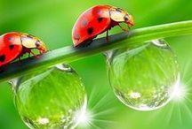Ladybirds - Lennä, lennä, leppäkerttu...