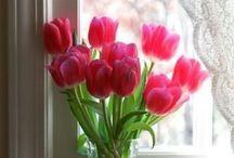 Tulips Love / by Almadiana Silva Amado