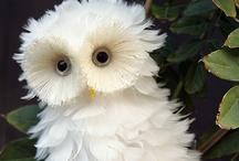 Really cute animals..etc. / by Jane Fazzari