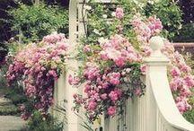 Gardening  / by Holly Massie