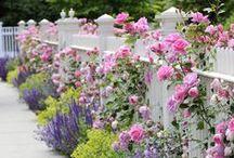 Gardens / by Henley Amanda DeWitt