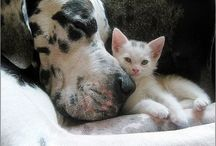 Friends Forever / by Jewel Bharati