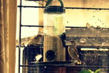 """Inspiration: Adopters' Pictures / The lover of Common birds, our friends and family are the """"adopters"""" who make little Sparrow sanctuaries in and around their homes, offices & neighborhood. This album is a result of their contribution & efforts."""