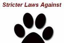 Dogs & Politics