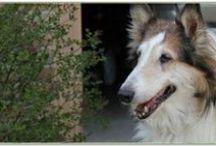 Senior to Senior Dogs - for Sponsorship Only