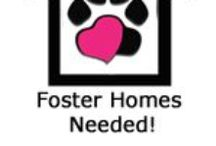 Fosters Needed !