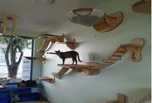 Cats tabgrafy