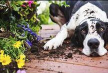 Mascotas / Nutrición, comportamiento, salud... Encuentra información últil sobre mascotas.