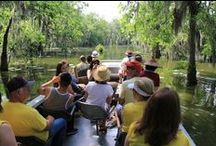 Louisiana Swamp Tours / Bonjour, I'm Bryan Champagne owner of Champagne's Cajun Swamp Tours in Breaux Bridge, Louisiana.  Ici on parle Francais.  We provide authentic Cajun Swamp tours to people from all over the world and to residents of Southern Louisiana (Lake Martin, Breaux Bridge, Baton Rouge, Lafayette and New Orleans).