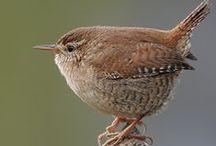 Bird Watching / Birds! Bird feeding, bird watching, crafts with birds.