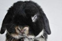 bunny, bunny, bunny