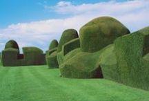 Buchsbaum im Garten / by Cornelia Weindl