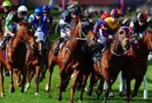 Horse Racing / National and international coverage.