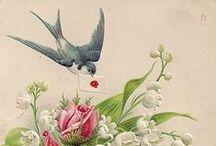 Pássaros / Lindos, fofos...
