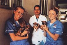 Send a Veterinary Nurse / Developments within veterinary training institutes across the world have often concentrated on investments in technologically advanced equipment and training of veterinary surgeons. However, good welfare of hospitalised animals starts before the consultation room and long after medical or surgical intervention; this is the domain of the veterinary nurse.