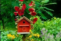 Bird Houses / The only bird houses I am interested in and  will pin are the ones that birds can actually live in.  No minitures that people collect and keep on shelves.  The more unusual they are the happier I am. / by S.Carol Eaton