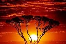 Around the World - Africa / by S.Carol Eaton