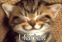 Cats / My personal favorite funny cat pictures.