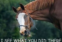 Horses / My personal favorite funny horse pictures.