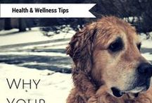 Dog Health and Wellness / Learn how to give your pet the best life possible! Check out this board for tips on keeping your dog safe, happy, and healthy from puppyhood through their senior years!