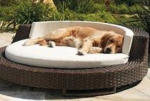 A dog can dream... / Some of the coolest (and most expensive) dog products around!  But hey, maybe some day!!   Luxury items and dog technology like automatic feeders, automatic ball throwers, interactive toys, and more!