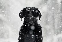 Beautiful Dogs / Beautiful and majestic dog photos :) Gorgeous dogs in gorgeous places!