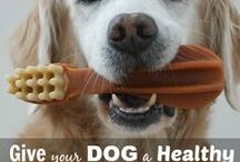 Dog Dental Health / Did you know that up to 80% of dogs show signs of dental disease by age 3! This board will highlight how to properly care for your dog's teeth and gums - in order to take control of their dental health.