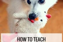 Dog Training and Behavior Tips / Everybody wants a well behaved dog - but it takes a lot of dedicated work and training! This board contains all sorts of tips and tutorials to make your pup a model citizen!